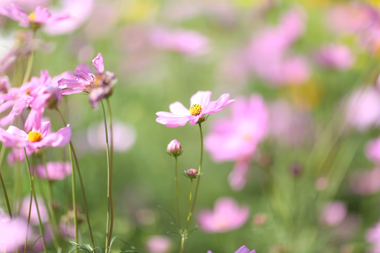 Základová fotografie zdarma na téma fotografie přírody, krásné květiny, kytka, příroda