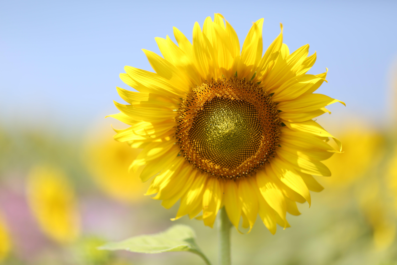Základová fotografie zdarma na téma barvy, flóra, jasný, krásné květiny