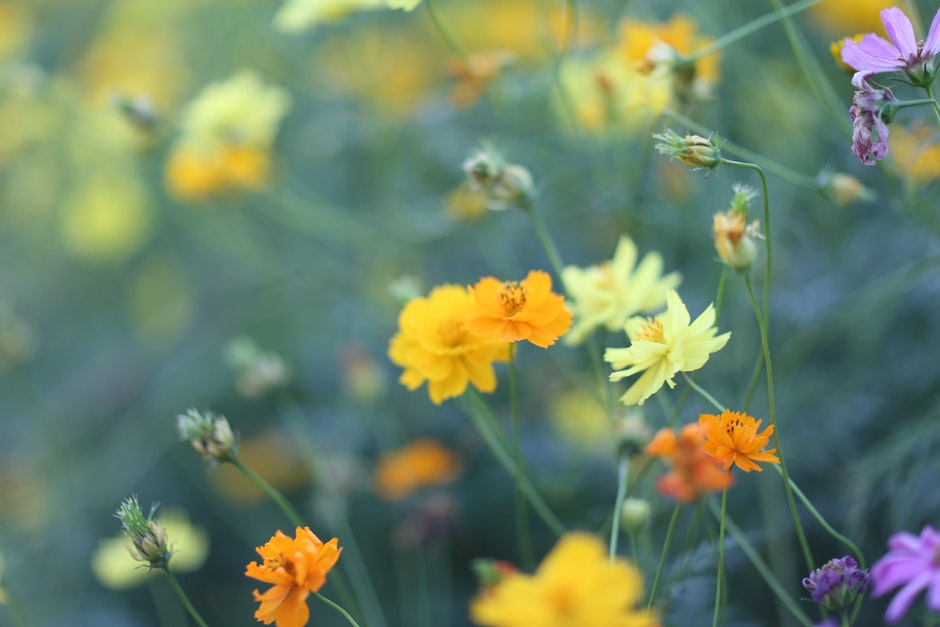 Selective Focus Photography Of Yellow Petaled Flower: Selective Focus Photography Of Orange, Yellow, And Purple
