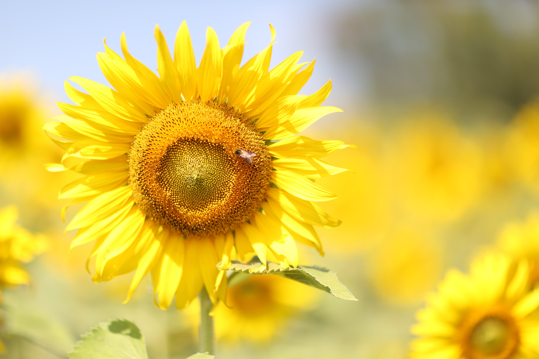 Základová fotografie zdarma na téma krásné květiny, květiny, kytka, příroda