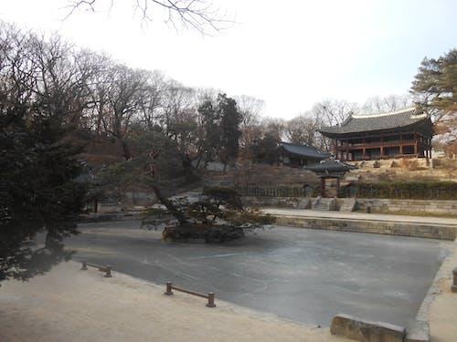 냉동 풀, 대한민국, 비밀 정원, 서울의 무료 스톡 사진