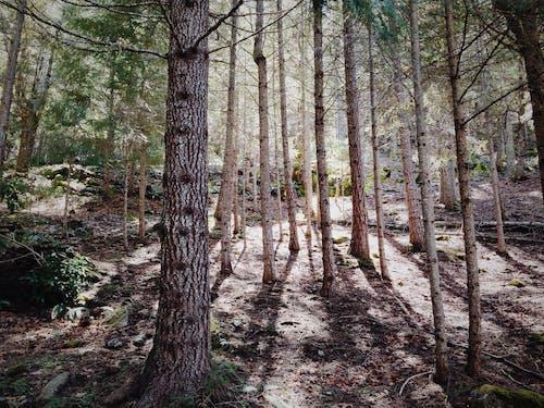 Darmowe zdjęcie z galerii z drzewa, las, natura, rośliny