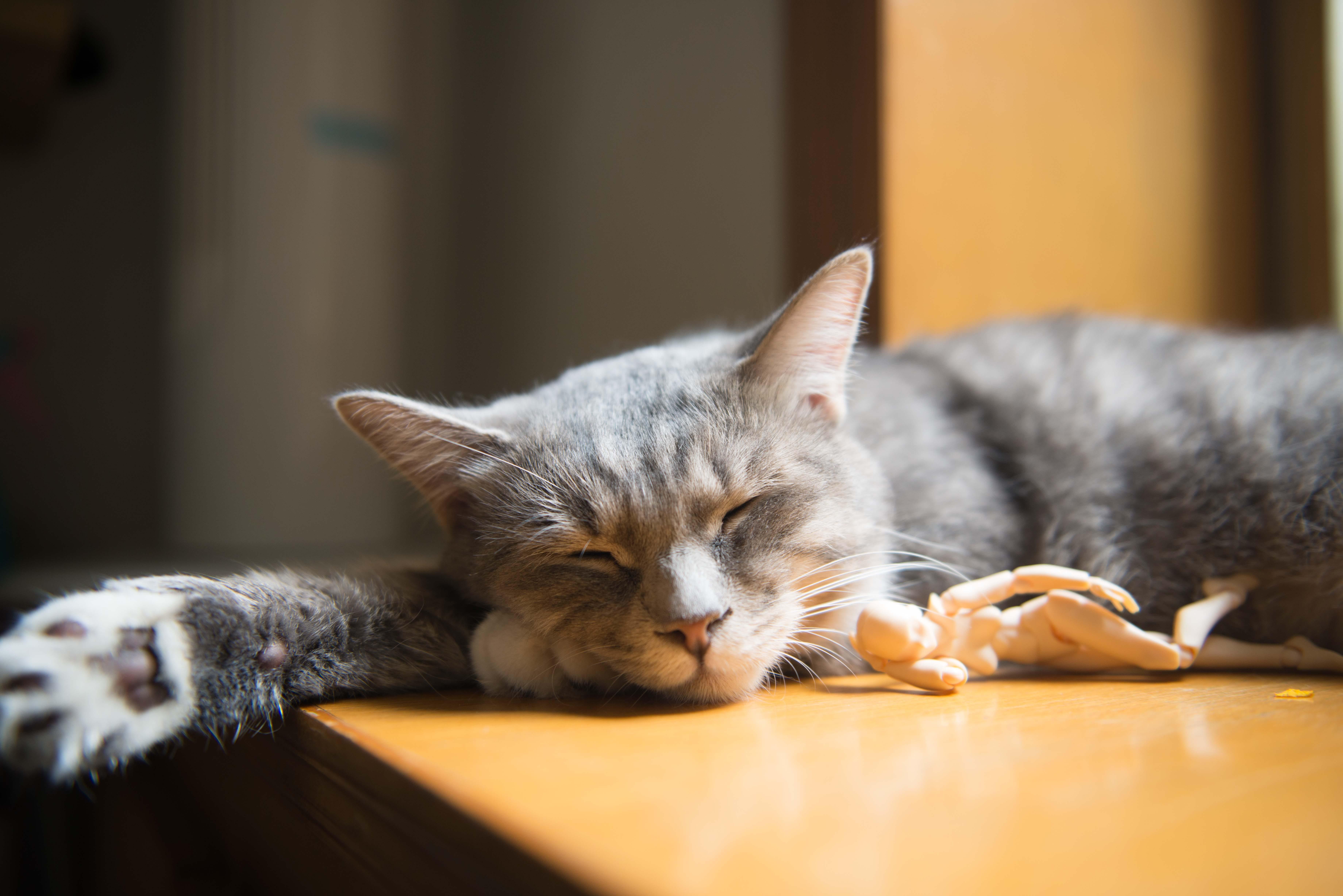 Foto stok gratis anak kucing, bayi, belum tua, berbulu halus