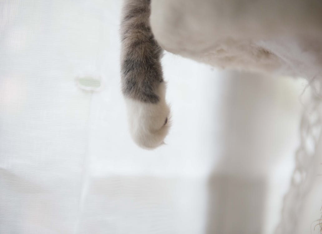 White and Gray Cat Paw