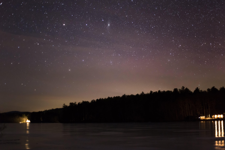 Forest Under Starry Night