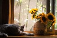 Gray Cat Near Gray Vase With Sunflower