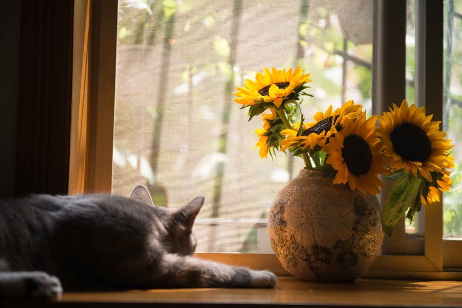 Gray Cat Near Gray Vase With Sunflower