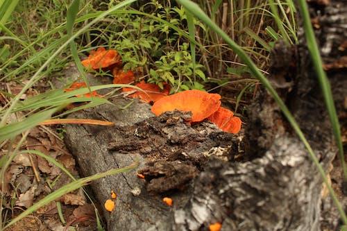 Free stock photo of fungus