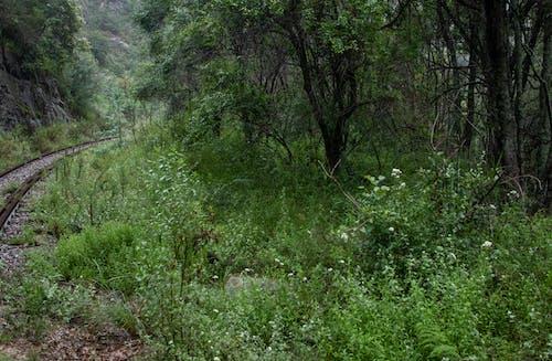 açık hava, ağaç gövdeleri, ağaçlar içeren Ücretsiz stok fotoğraf