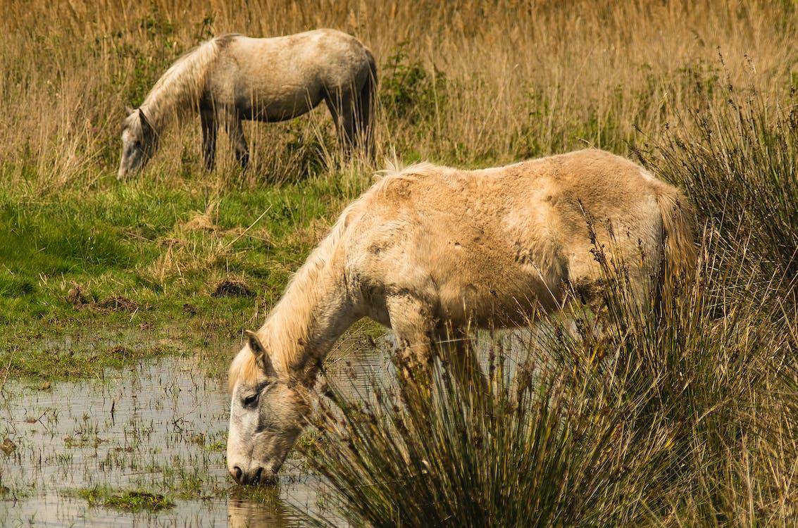 Free stock photo of spain, swamp