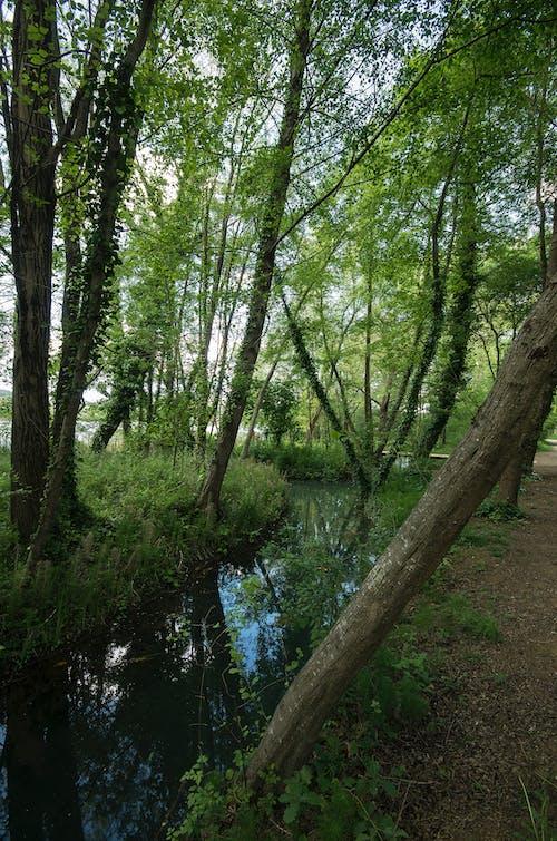 沼澤, 西班牙 的 免費圖庫相片