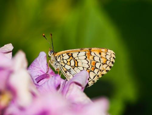 花上的蝴蝶 的 免費圖庫相片