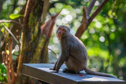 Immagine gratuita di alla ricerca, animale, asia