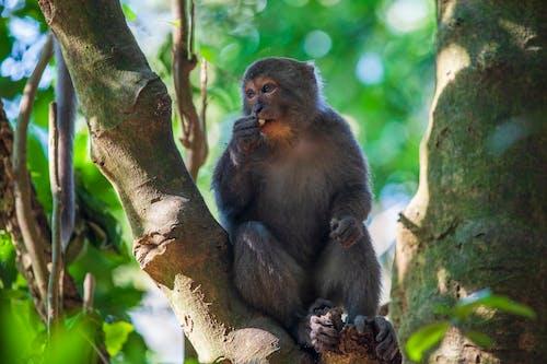 Immagine gratuita di albero, animale, cappellone