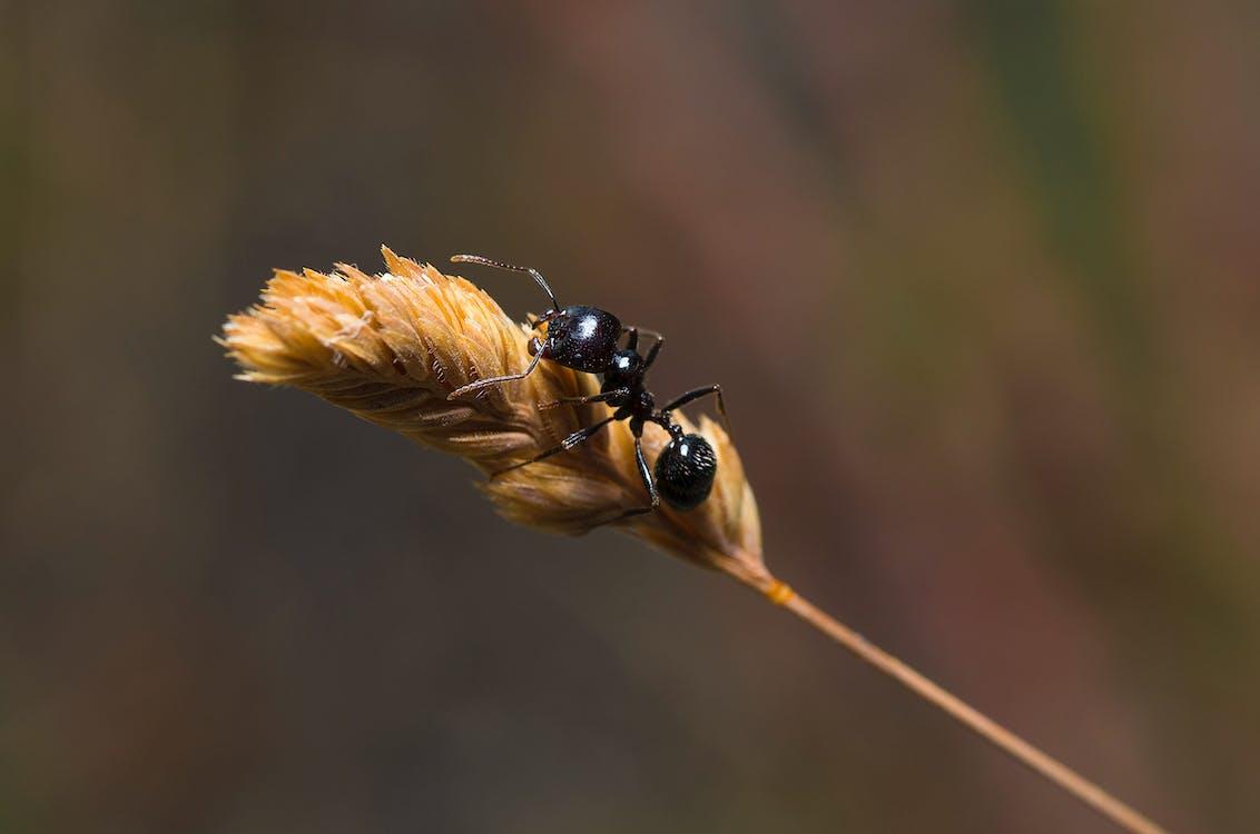 Free stock photo of ant