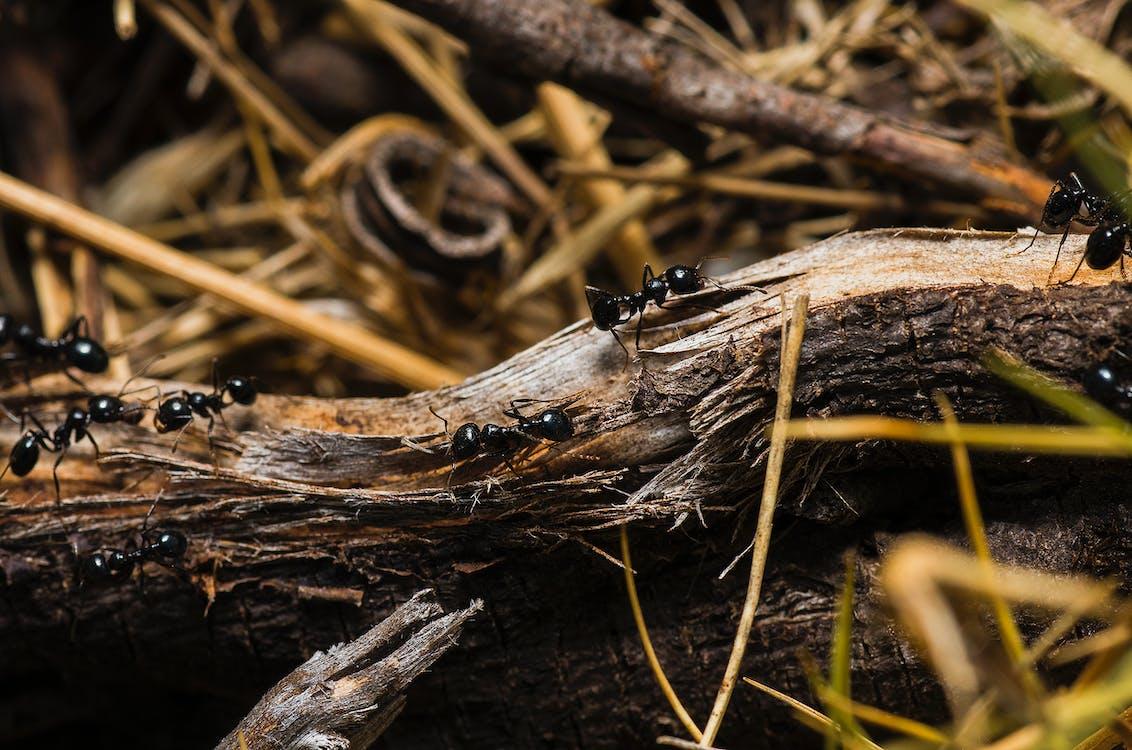 Black Ants on Brown Tree Trunks