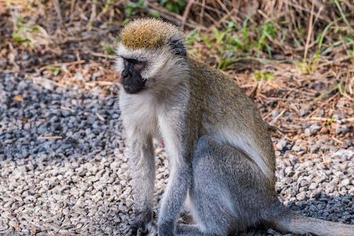 Monkey Sitting on Stones