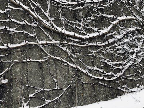 Free stock photo of art, beautiful nature, black and white