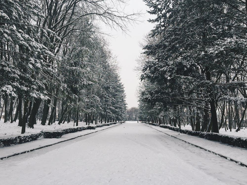 arbres, blanc i negre, bosc