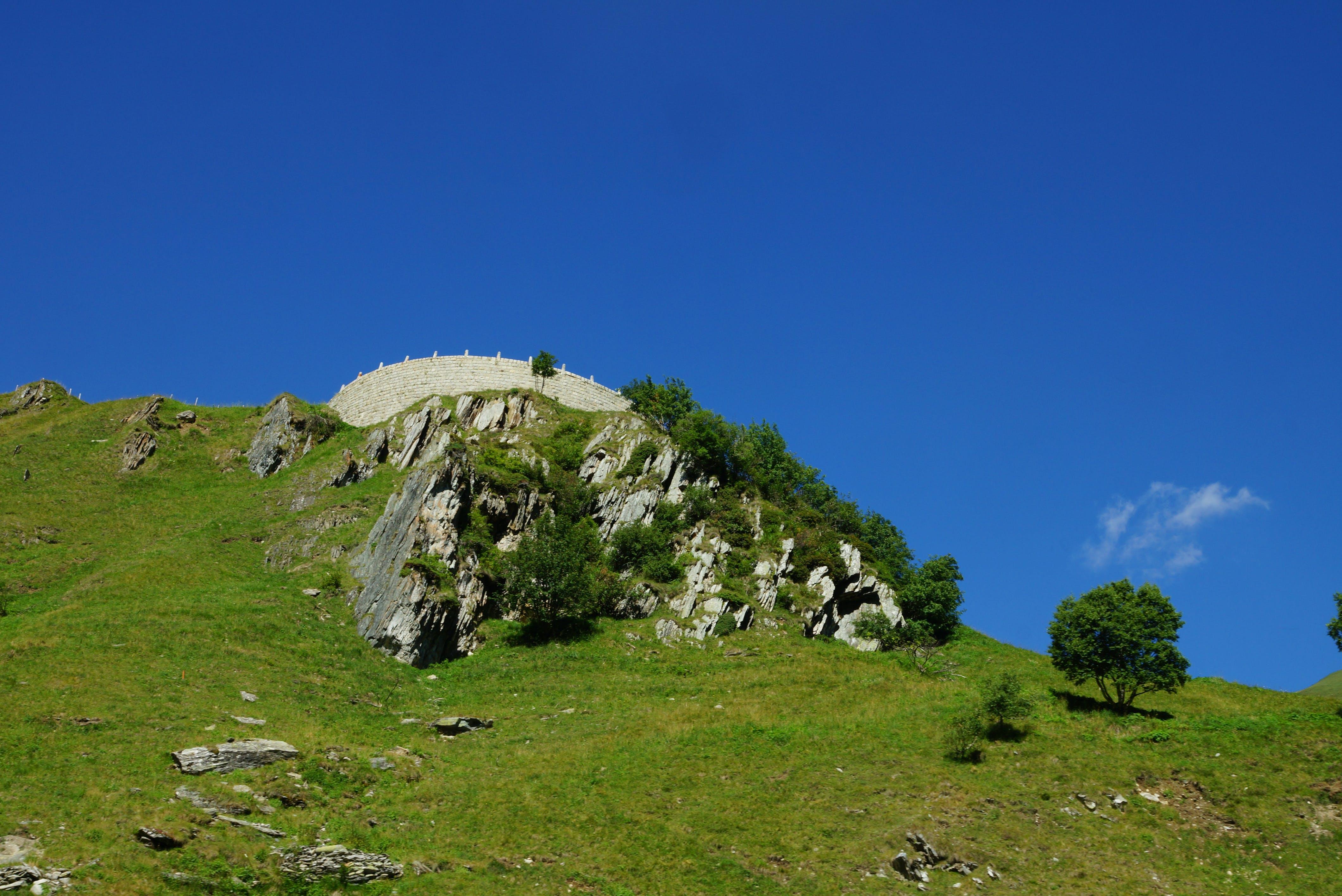 Free stock photo of blue sky, meadow, tree