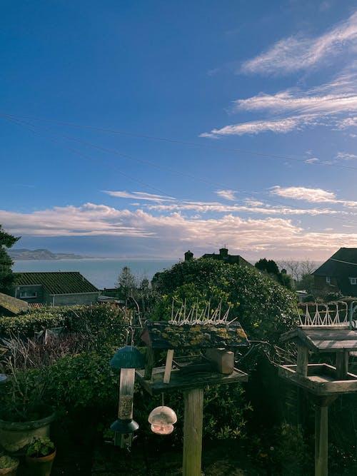 Backyard with birdhouses near plants and bushes near houses
