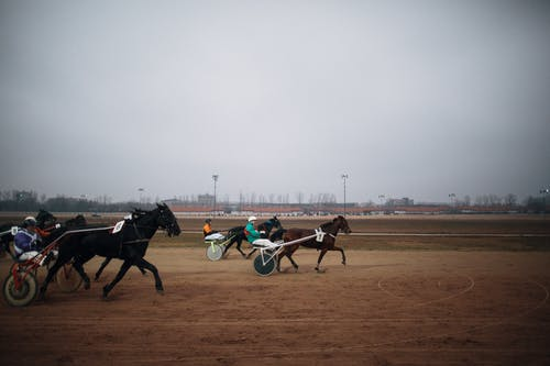 Close-Up Shot of Horse Racing
