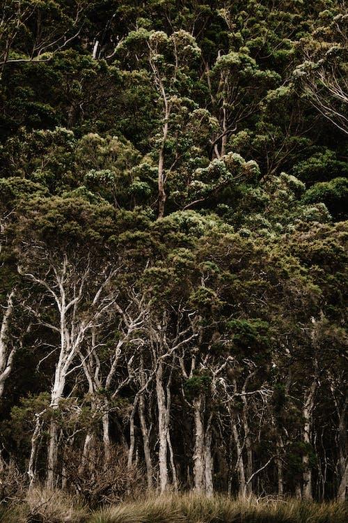 Foto profissional grátis de alto, árvores, aumento