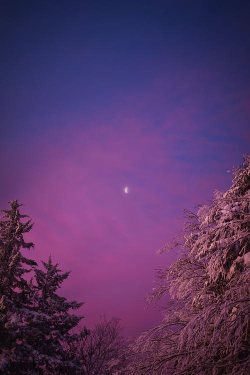 Immagine gratuita di alberi coperti di neve, cielo viola, crepuscolo
