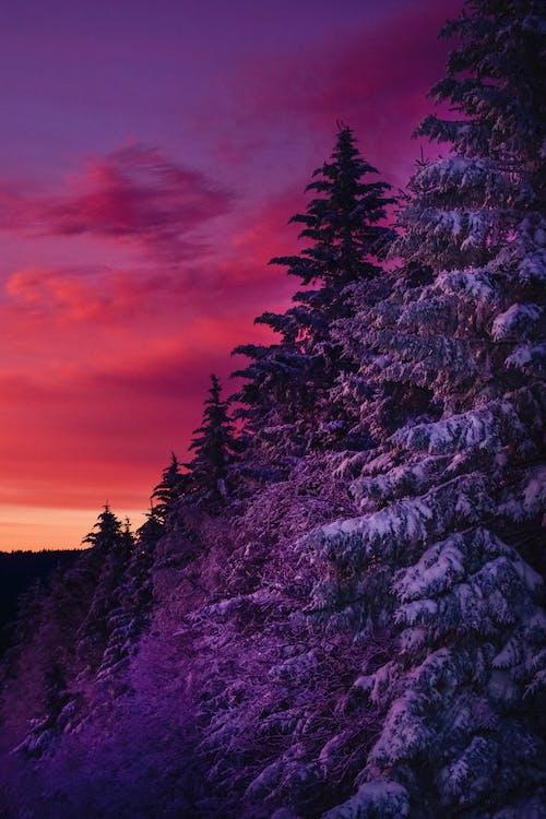 Immagine gratuita di cielo rosso, coperto di neve, crepuscolo