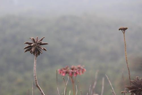 Free stock photo of landscape, plants