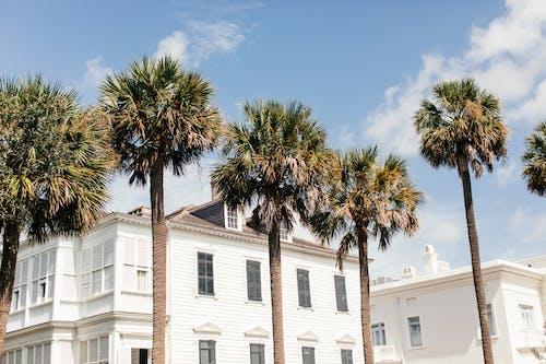 White Concrete Building Near Palm Tree Under Blue Sky