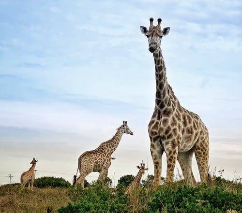 Free stock photo of africa, animal, barbaric