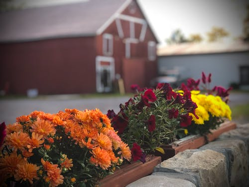 Free stock photo of autumn, autumn colors, barn