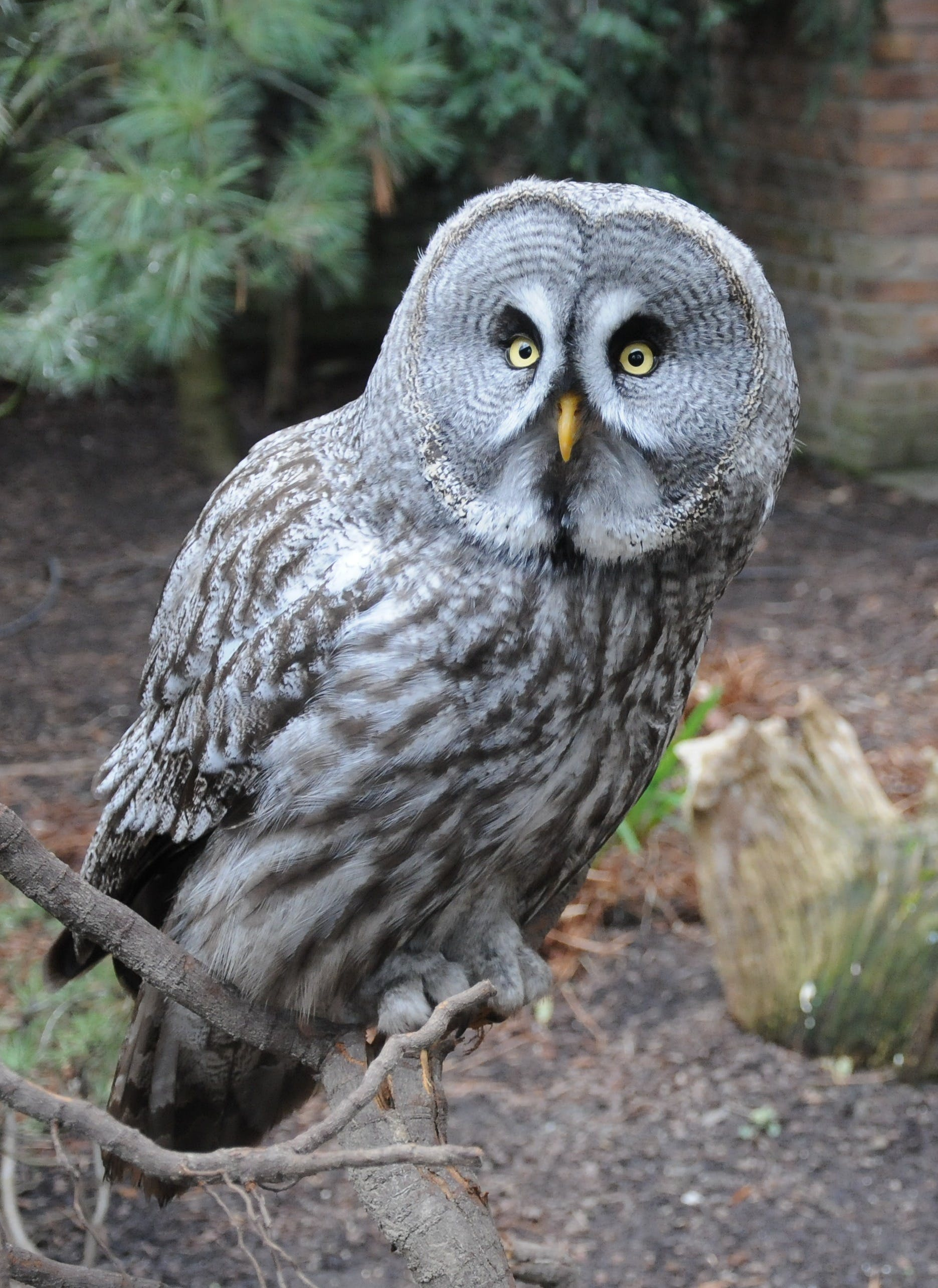 Photo of Grey and Black Owl
