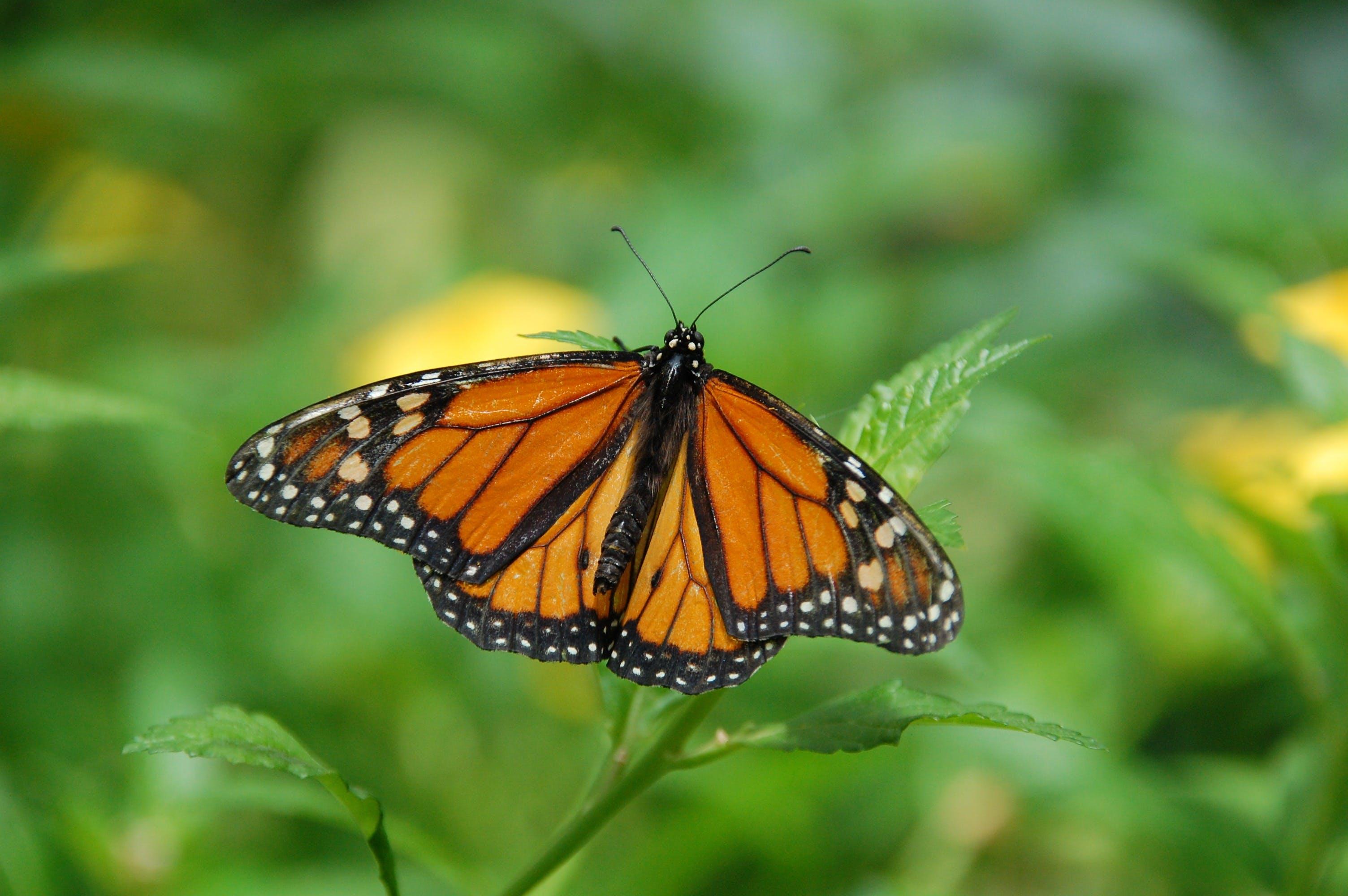 곤충, 나비, 매크로, 벌레의 무료 스톡 사진