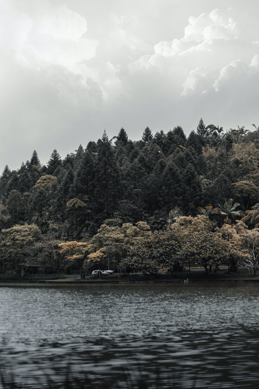 Kostenloses Stock Foto zu bäume, berg, himmel, holz