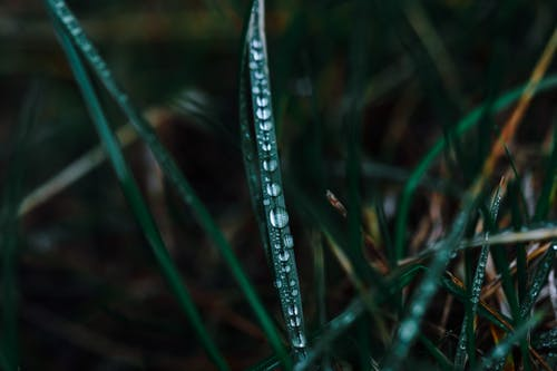 Grass with small transparent water drops on green stem growing on meadow on blurred background