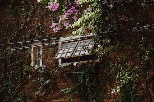 Základová fotografie zdarma na téma architektura, barva, budova, denní světlo