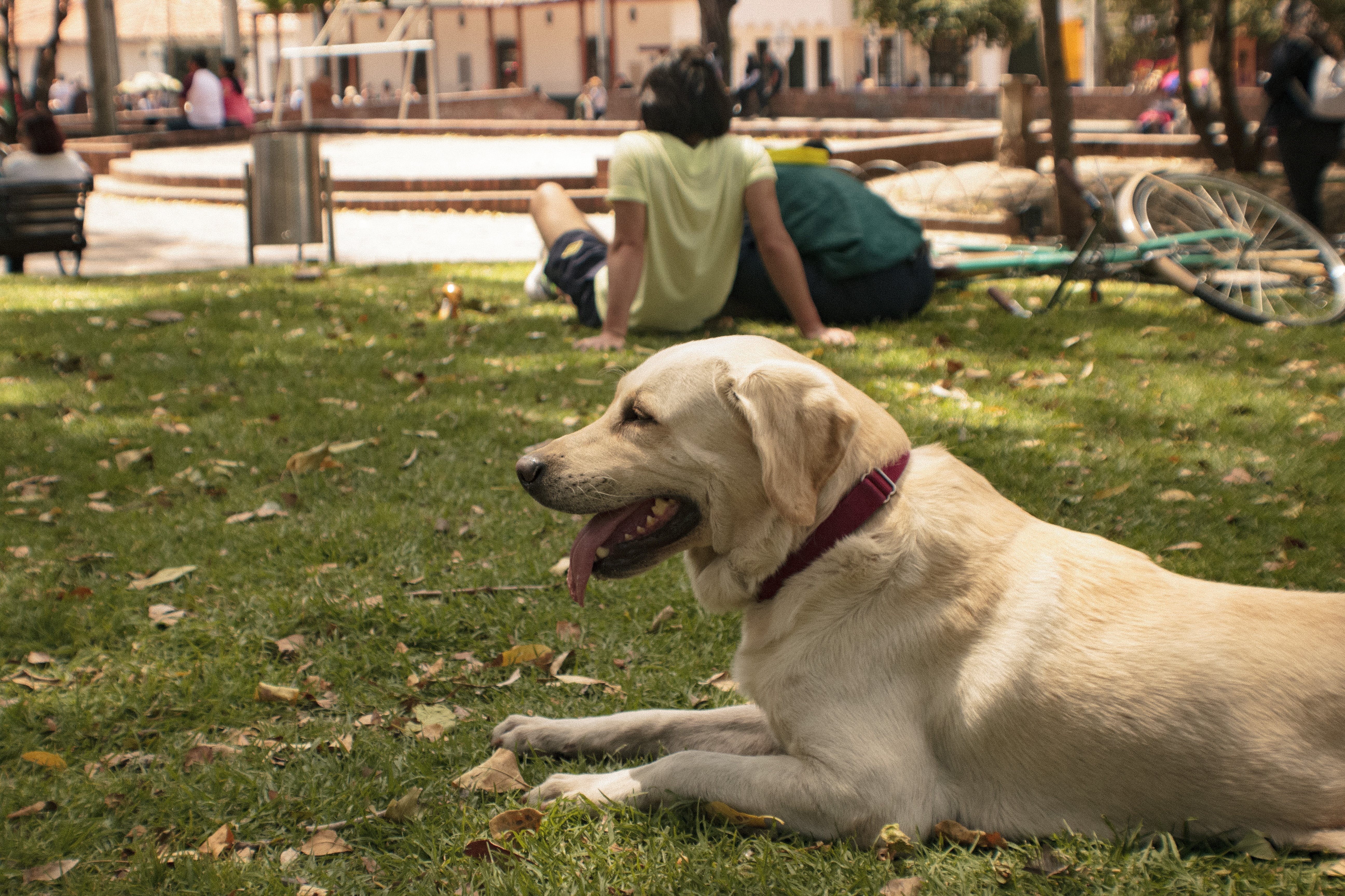 Free stock photo of city park, dog, fun, green