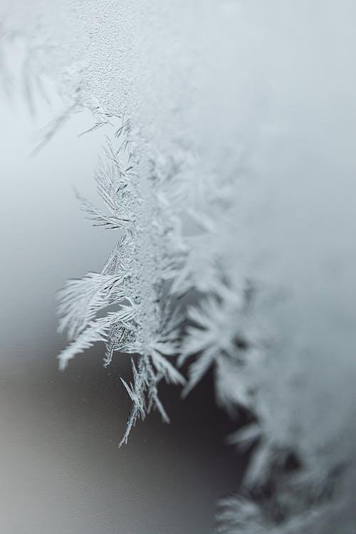 Kostnadsfri bild av dimma, frost, frostig