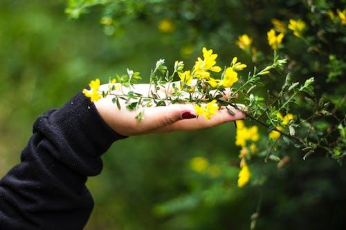 Çiçekler, doğa, doğa fotoğrafçılığı, kız içeren Ücretsiz stok fotoğraf