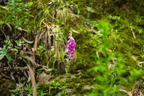 araba yolculuğu, Çiçekler, dağ, doğa içeren Ücretsiz stok fotoğraf