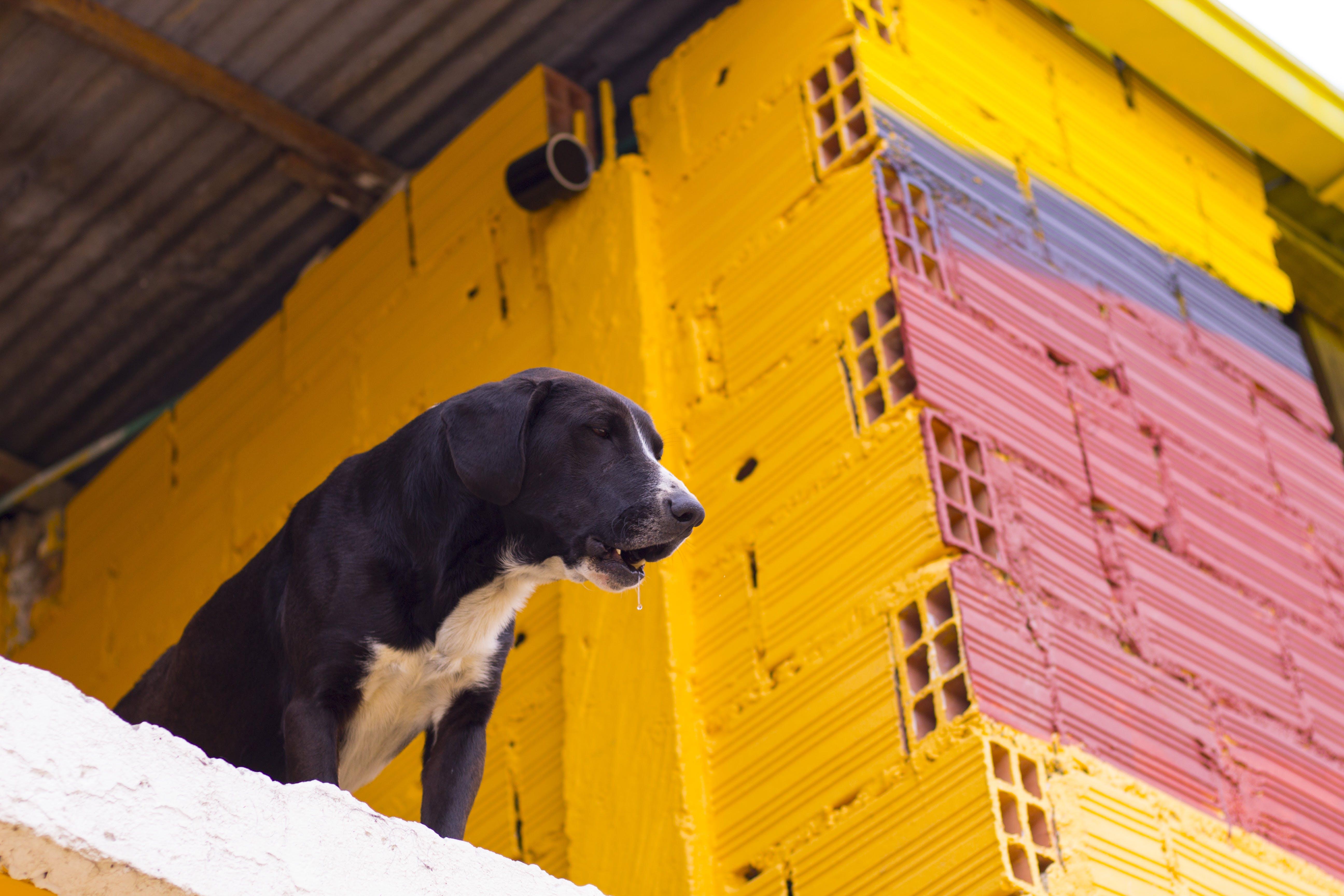 Free stock photo of animal, animal photography, art, blue