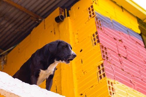 Kostenloses Stock Foto zu blau, gelb, haustiere, hund