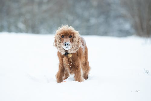 Brown Long Coated Dog on Snow Covered Ground