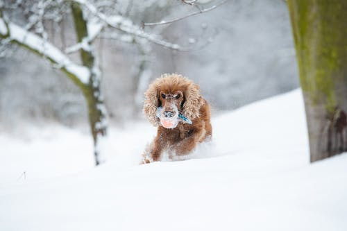 Brown Long Coated Small Dog on Snow Covered Ground