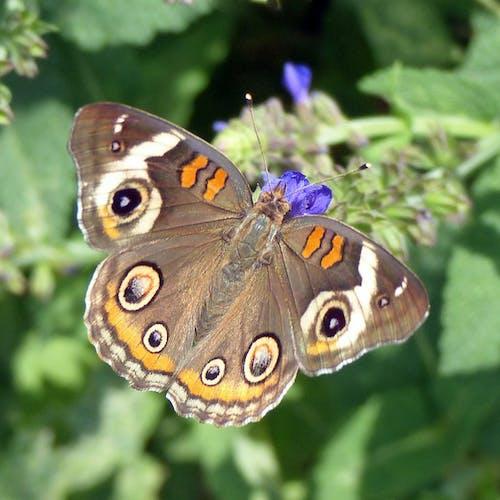 Δωρεάν στοκ φωτογραφιών με πεταλούδα, πεταλούδα σε λουλούδι, πεταλούδες