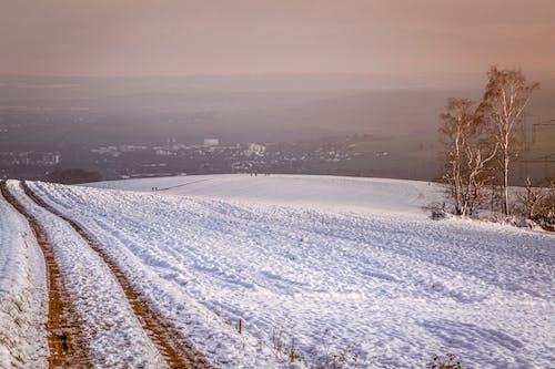 冬季, 冷, 寒冷 的 免费素材图片