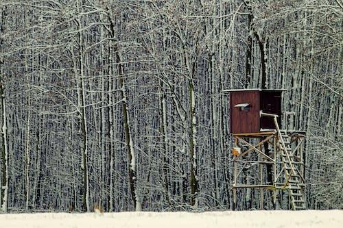 冬季, 座位, 打獵 的 免费素材图片