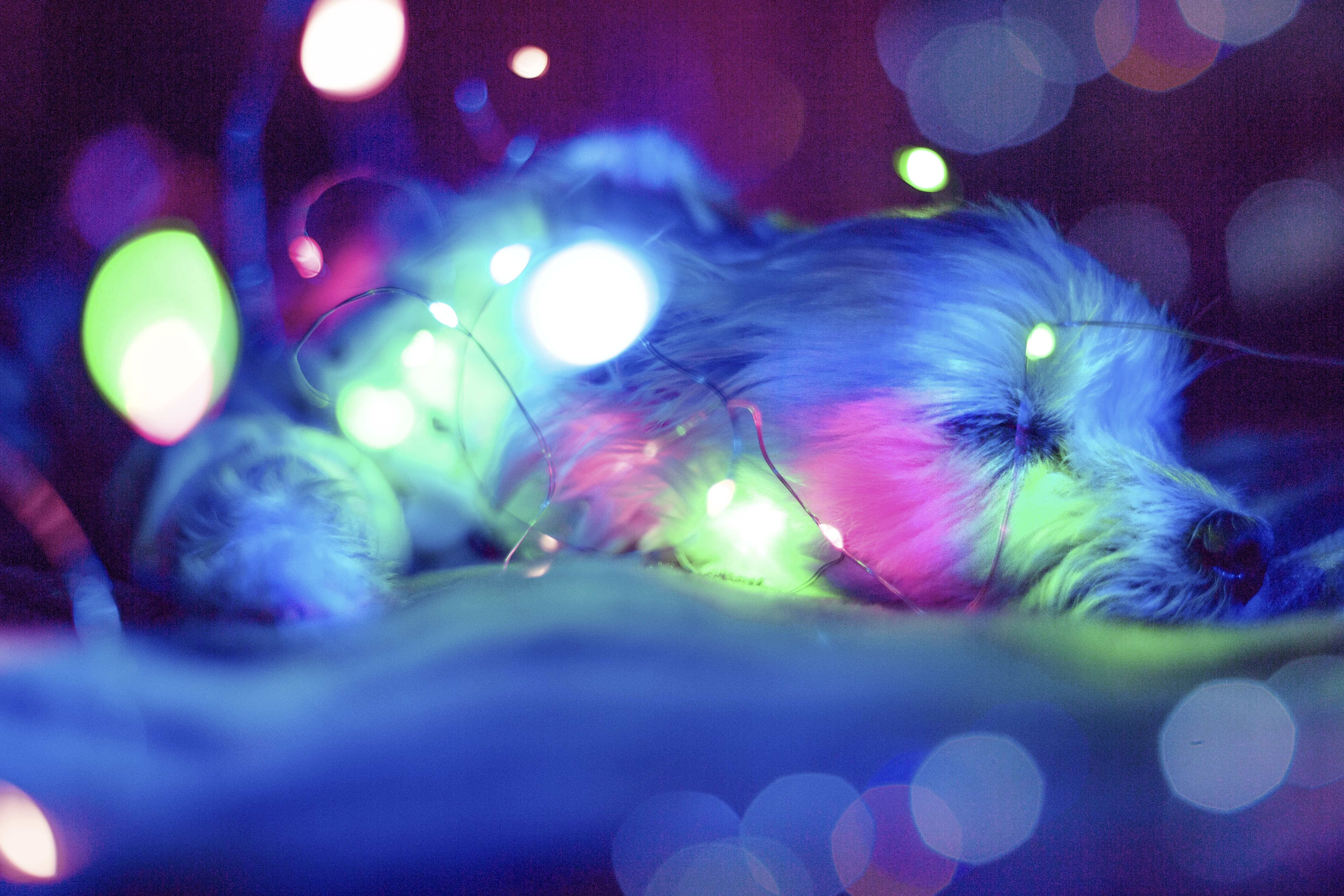 Blue , Green and Pink Light Bokeh
